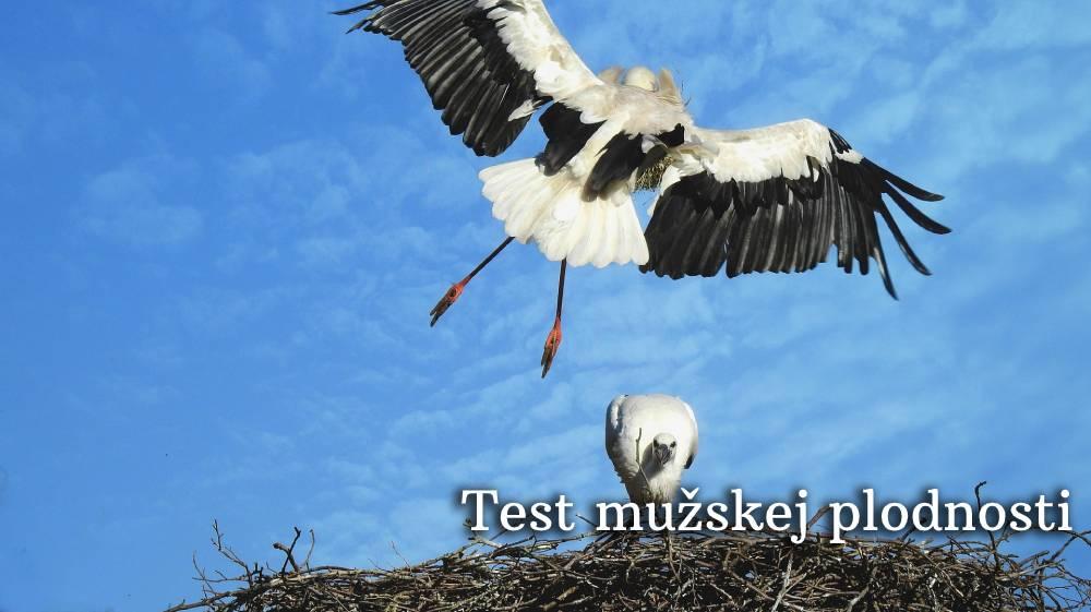 test mužskej plodnosti